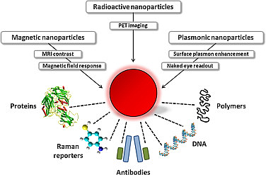 The Functionalization and the applications of nanoparticles in biomedicine  (Source: ScienceDirect)