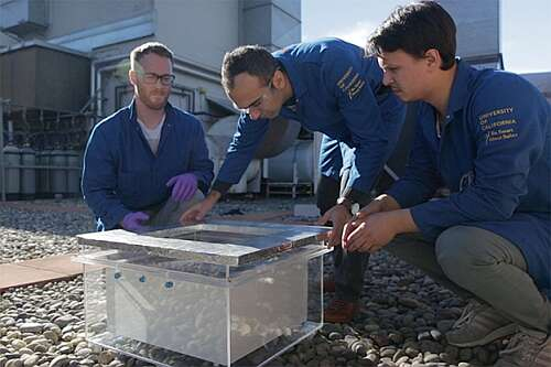 'Markus Kalmutzki, Farhad Fathieh and Eugene Kapustin set up the water harvester for tests on a rooftop on the UC Berkeley campus. The MOF is inside the interior box, and the foil-wrapped top is designed to keep the outer box cool enough to condense the water vapor driven from the MOF by sunlight. (Stephen McNally photo)' (Source: Berkeley News)